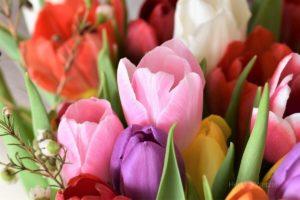 Frühlingssingen im Altenheim